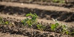 المتطلبات المائية لزراعة المحاصيل الصيفية