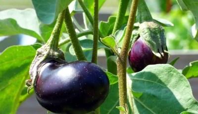 المتطلبات الحرارية لزراعة بعض المحاصيل الصيفية