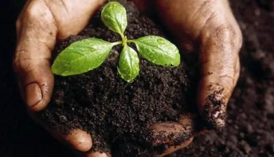تأثير الأسمدة العضوية الطبيعية على النمو والإنتاج