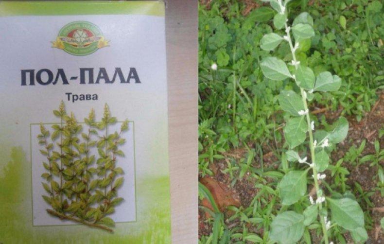 slimarea efectelor secundare ale ceaiului pe bază de plante