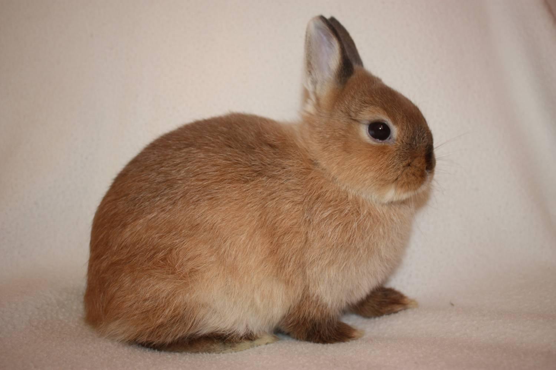 целесообразно найти кроликов с фото в рязани ярких