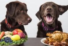 El alimento ideal para nuestro perro