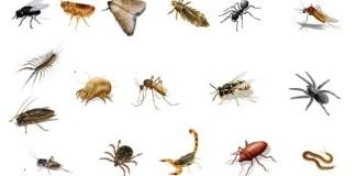nutrición en animales invertebrados
