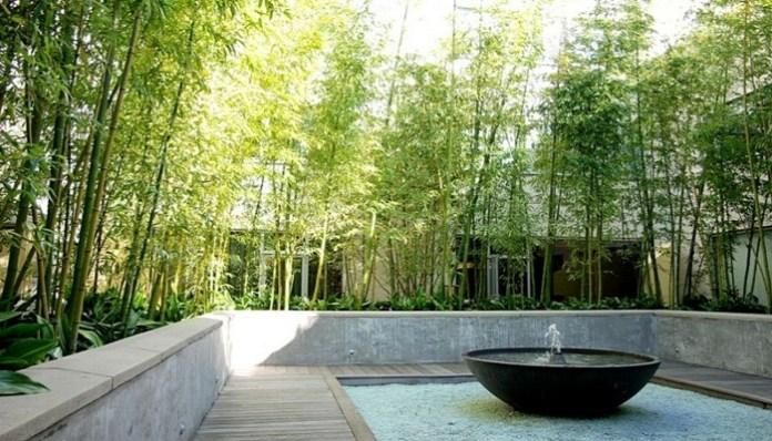 Bambú en el jardín