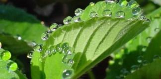 transpiración en las plantas