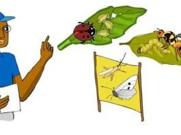 eliminación de plagas