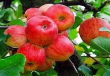 frutales ecológicos