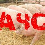 Беларусь ограничила ввоз свинины из  Бразилии