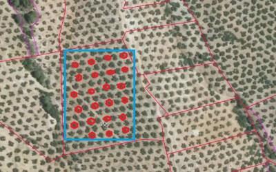 El análisis foliar en parcelas de pequeña superficie