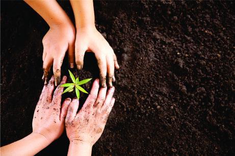 ONU instituiu 2020 como o Ano Internacional da Saúde Vegetal