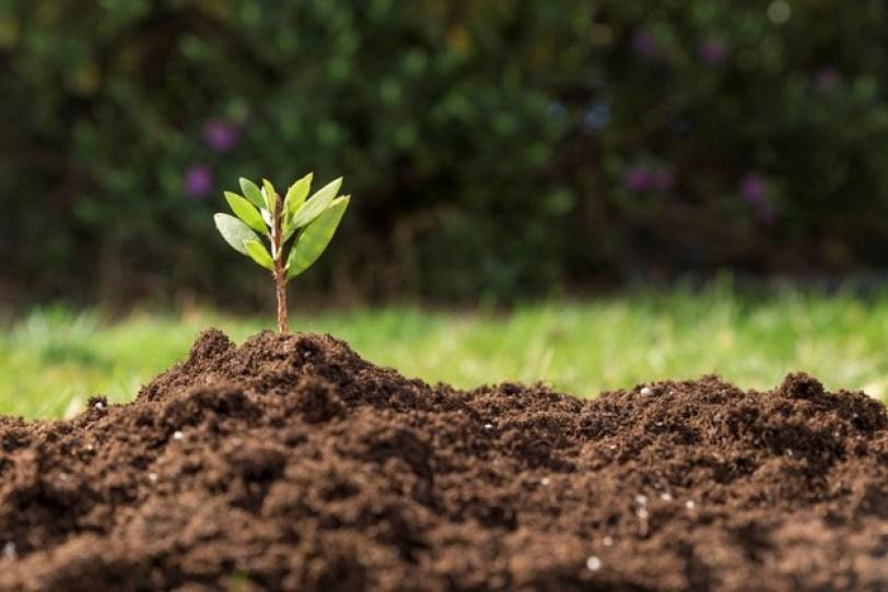 Adubação orgânica: conheça sua importância!