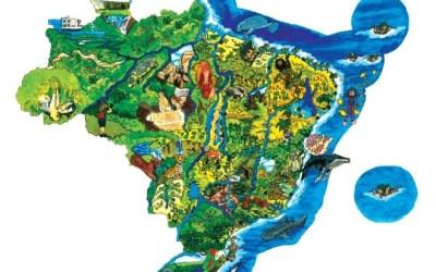 A biodiversidade brasileira e a importância da sua preservação!
