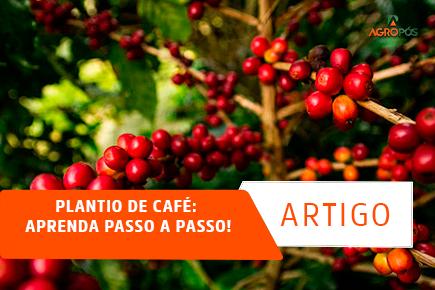 Plantio de Café: Aprenda Passo a Passo!