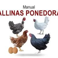 Guía técnica de Gallinas de postura PDF