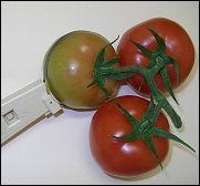 Calibre De Fruta plástico 20-100mm