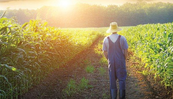 Αγροσύμβουλος Ο.Ε. - Δικαιούχοι Νέοι Αγρότες