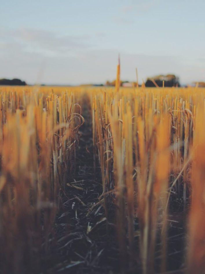 Foto de lavoura seca