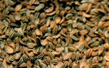 ABS Seed - Agro Business Solutions