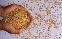 ABS Seed thumbnail