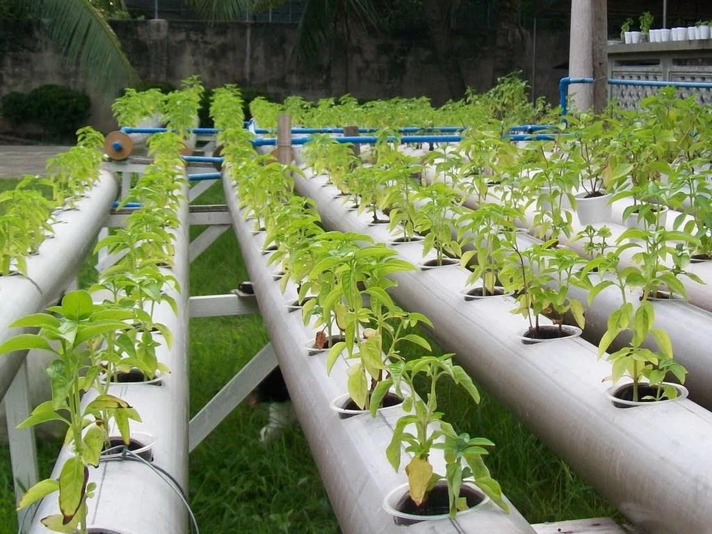 как выращивать гидропонным способом
