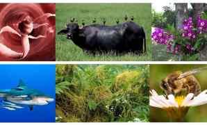 Pengertian Simbiosis Adalah - Jenis dan Contohnya
