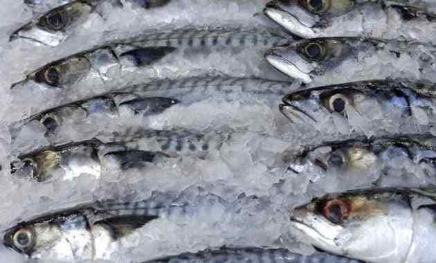 5 Cara Pengolahan Ikan Beku Terbaik