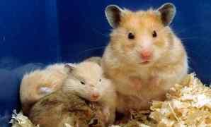5+ Jenis Tanaman Berbahaya Untuk Hamster