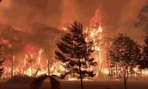 Pengertian Kebakaran Hutan Adalah  Penyebab, Dampak dan Cara Mencegah