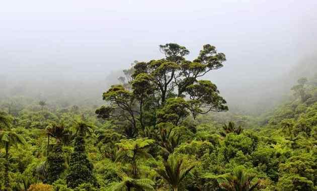 5 Cara Melestarikan Hutan Hujan Tropis