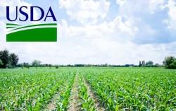 USDA-Maiz w