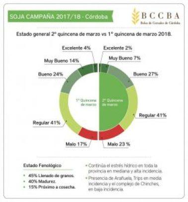 BCCBASoja
