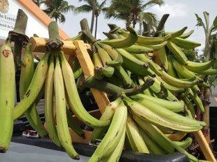 Plátanos brazo de hombre