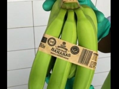 República Dominicana: Bandas biodegradables para las bananas