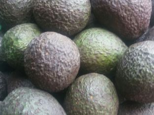 Aguacates hass