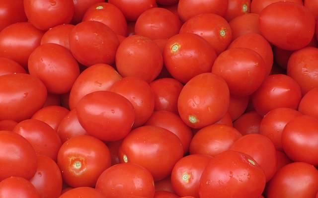 Tomate bugalú