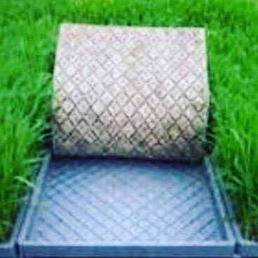 Sembradora de arroz