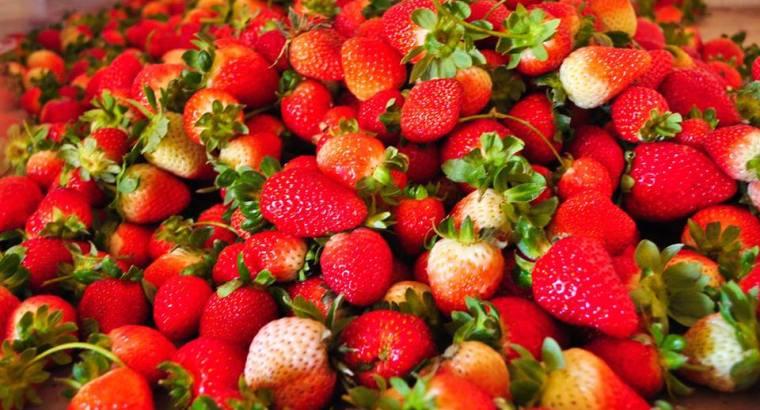 Fresas de la loma