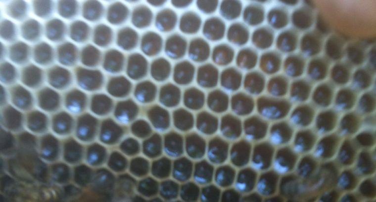 Vendo miel en panales