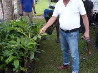 Plantas de mangaña