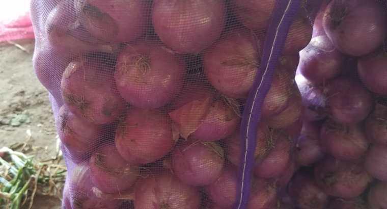 Vendo cebolla criolla
