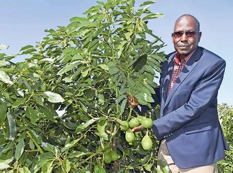 Un productor de Kenia utiliza energía solar en sus plantaciones de aguacate