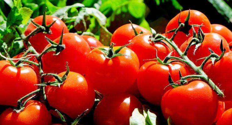 Aroma de tomate para proteger los cultivos
