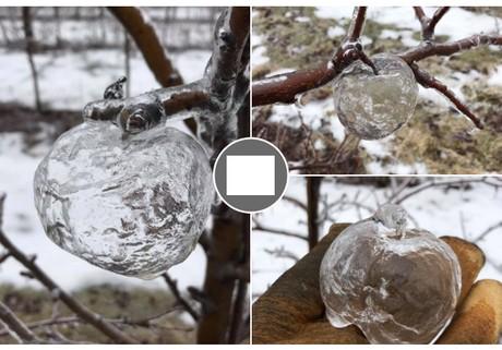 La lluvia crea «manzanas fantasma» en Míchigan