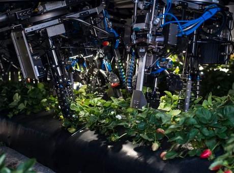 Los grandes agricultores de los Estados Unidos esperan poder cosechar sus futuros cultivos con robots