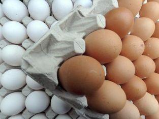 Huevos al por mayor