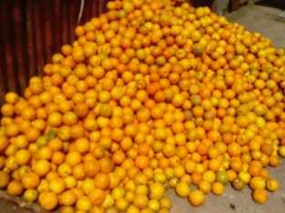 Tenemos naranjas agrias