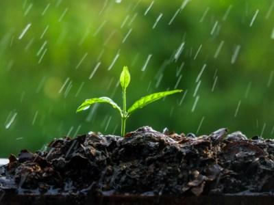 El uso eficiente del nitrógeno permite una adecuada gestión del agua