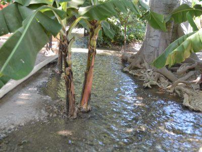 República Dominicana es uno de los países más ineficiente en el manejo del agua de riego