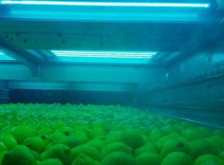 Inventan un proceso para lavar frutas y hortalizas sin agua