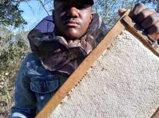 Vendo panales de abejas